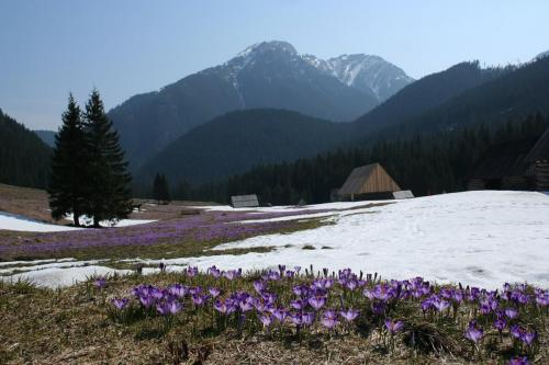 2048px-Dolina_ChocholowskaTatry_-_Chocholowska_Valley_Tatra_Mountains_Poland_